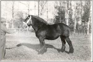 ajdrik 8484