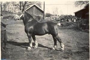 baron blanko 5652