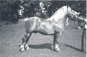 lorenzo 6458 2