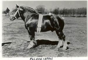 palson 8940
