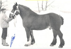 pampas 11460