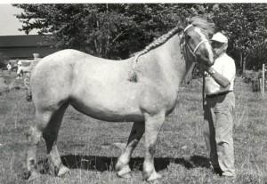 tapira 114569
