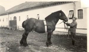 vasser 6846